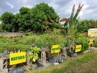 Natives & Butterfly Plants