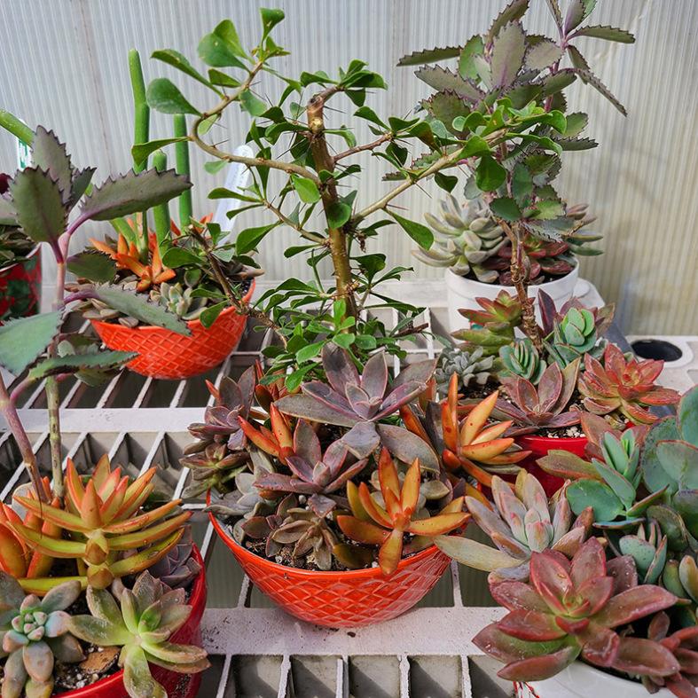 Small and Medium Succulent Gardens
