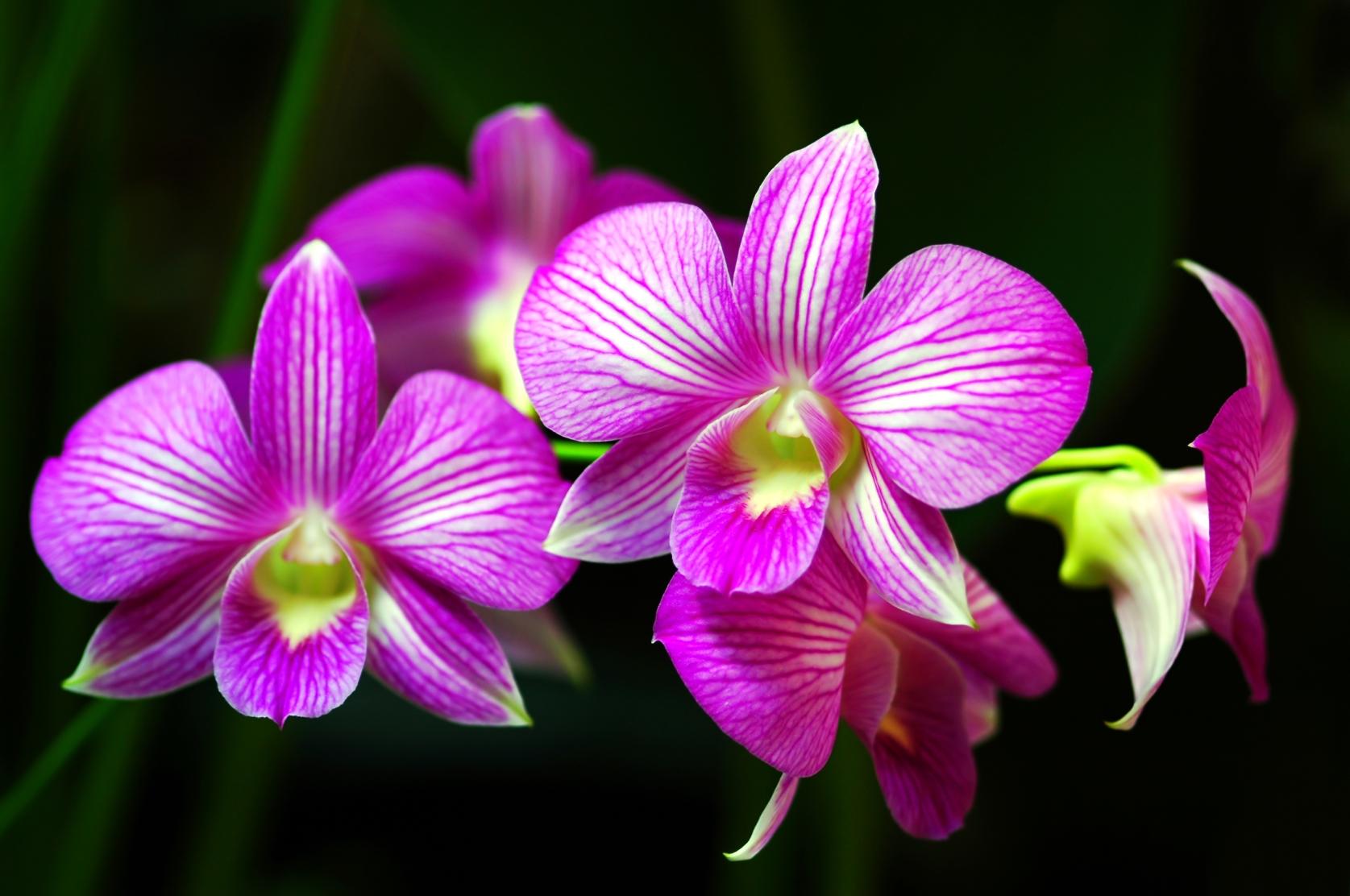 event navigation - Orchid