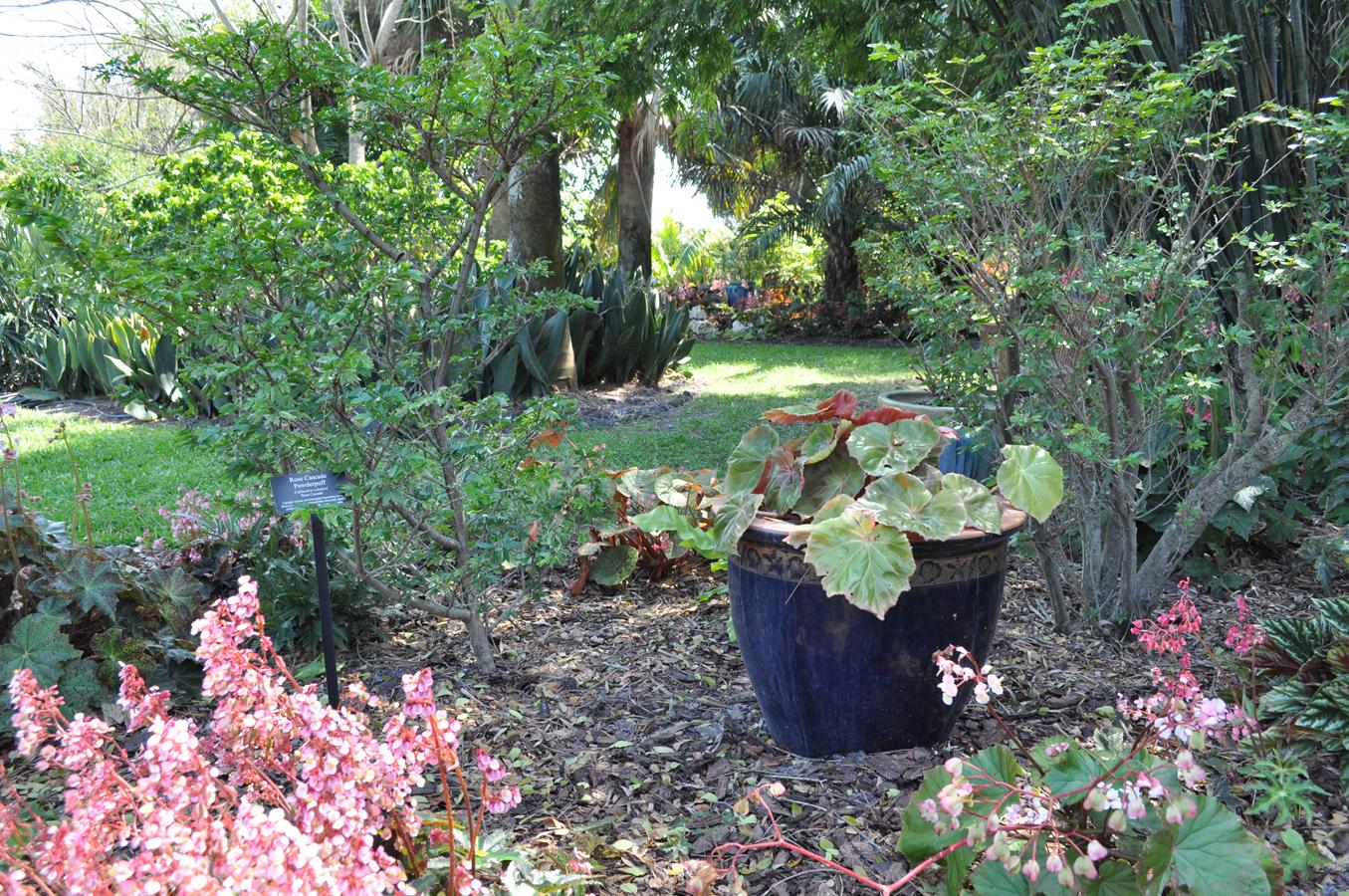 Begonia Garden Mounts Botanical Garden Of Palm Beach County
